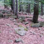 kameny v lese