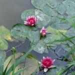 květy na Sázavě