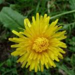 něžný květ